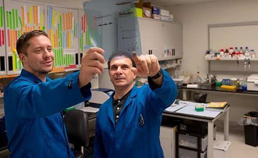 加州大学洛杉矶分校:新的筛选方法可识别癌细胞代谢的抑制剂