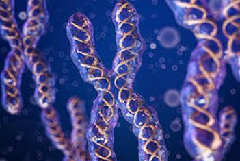 有关蛋白质的研究可能成为抑制恶性肿瘤发展的关键