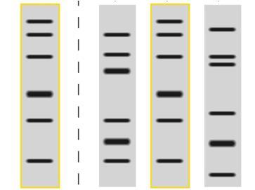 研究者们有望通过DNA指纹发现癌症产生的罪魁祸首