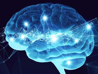 犬类脑瘤治疗可能与人类脑瘤治疗有潜在关系