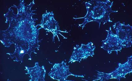 研究者改造出可用光控制的CAR-T细胞或可用于皮肤癌