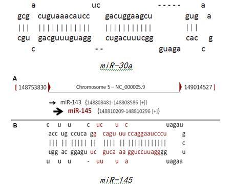 MicroRNA在驱动癌症中显示出意外的功能