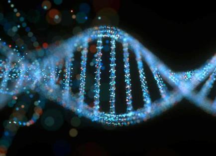 在DNA复制中发现新型癌症药物