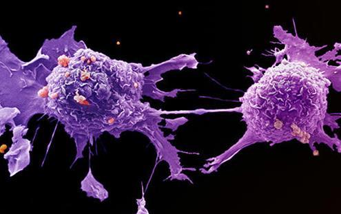 科学家利用癌细胞的特点来对抗癌症
