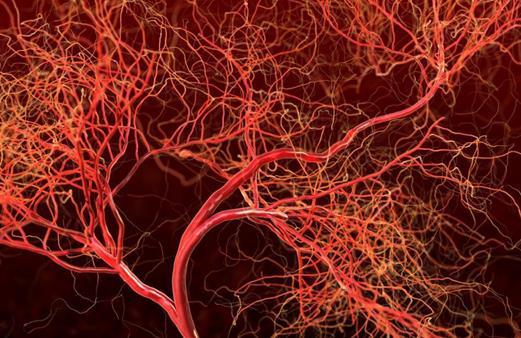 禁用关键酶可阻止肿瘤新血管生成