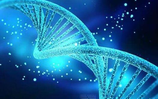 关于NGS在肿瘤临床诊疗中的作用