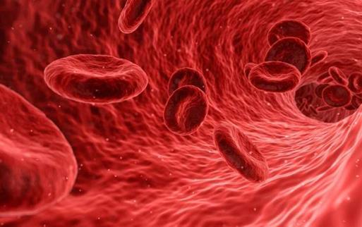 干细胞移植新方法可改善血液患者的治疗