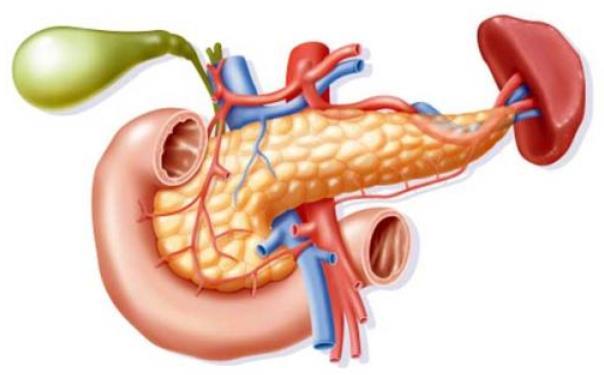 坚持口服糖尿病药物可能改善患大肠癌的糖尿病患者的存活率