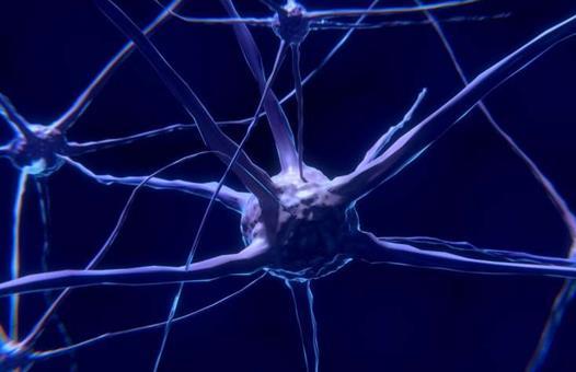免疫疗法显示出治疗脑癌的希望