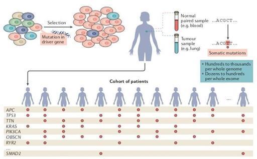 已鉴定出568个可能的癌症驱动基因