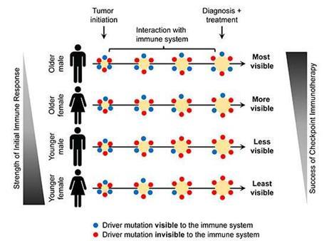 为什么部分患者对癌症免疫治疗反应率低