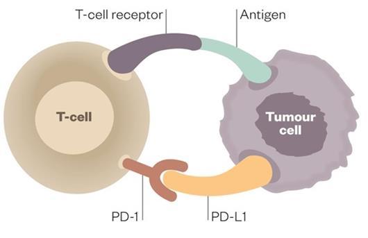 免疫治疗耐药研究有新突破