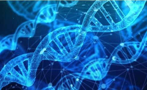 研究人员发现PARP酶可修复断裂的双链DNA