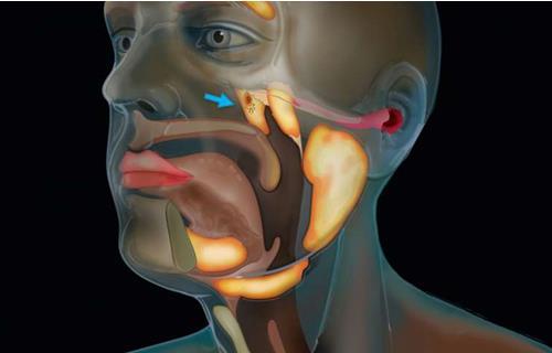 癌症研究人员发现了新的唾液腺