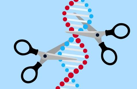 "DNA""剪刀""能有效阻止肿瘤细胞进行复制"