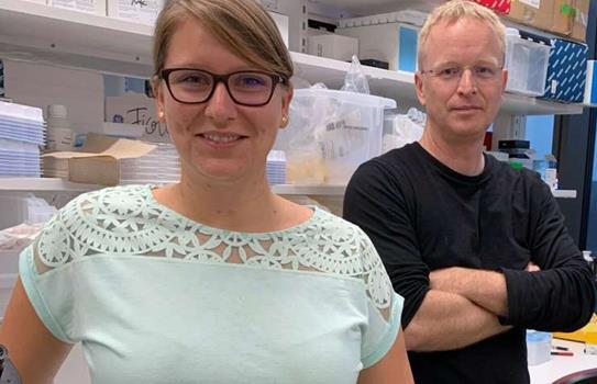 关于巨噬细胞的免疫疗法研究有所突破