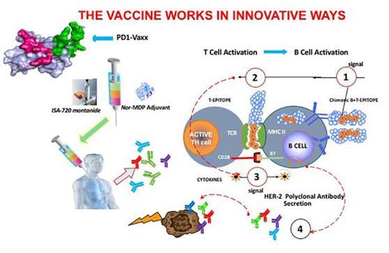治疗性PD-1癌症疫苗在动物研究中被证明是安全有效的