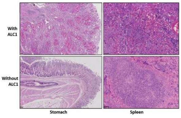 阻断DNA修复酶可能有助于治疗某些癌症